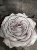 """декор на стену """"Роза"""""""